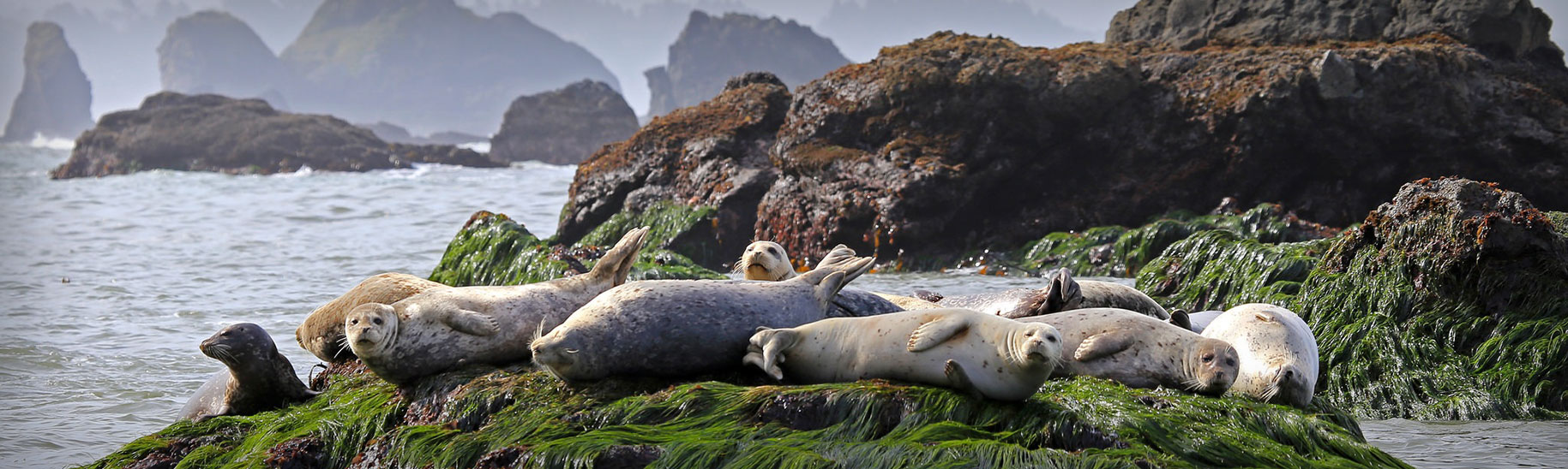 photo of sea lions on rocks